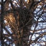 Гайно на дереве