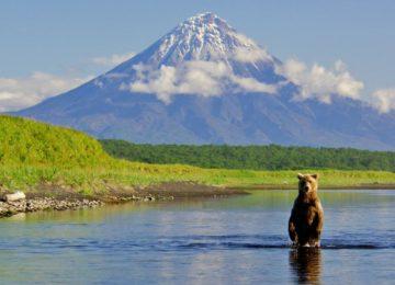 Медведь на фоне вулкана
