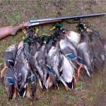 Отчет после охоты
