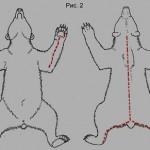 Схема снятия шкуры