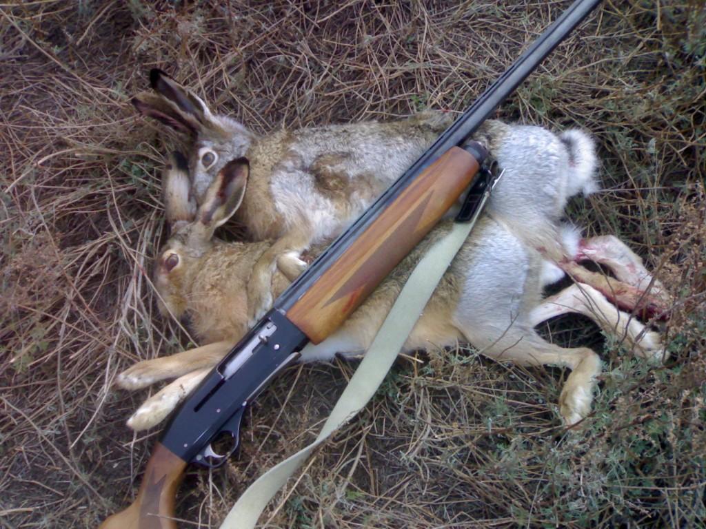 Ружье и добытые зайцы