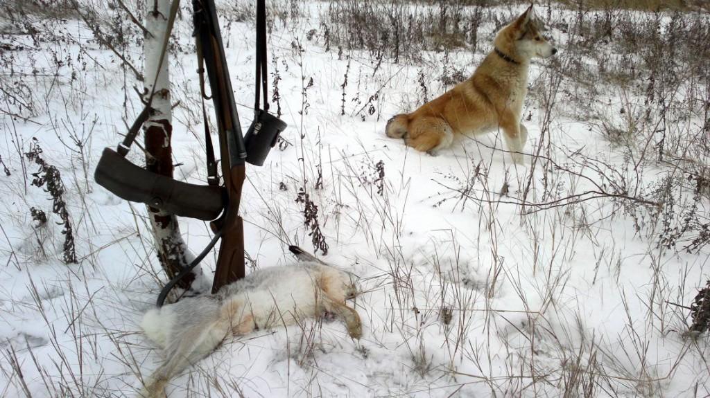 Собака лежит рядом с зайцем