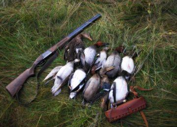 Утиная охота – на какие виды разрешена и особенности проведения в разные сезоны