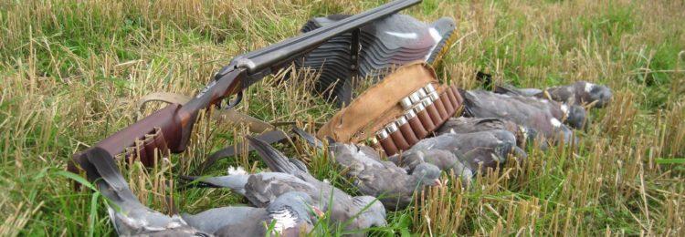 Охота на диких голубей – как подготовиться, какие виды бывают и в чем интерес