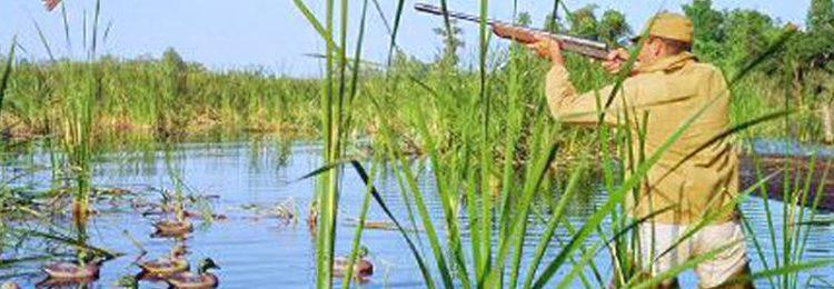 Стрельба по птице – как гарантированно попадать в летящую и сидящую цель
