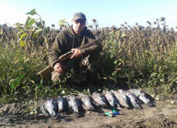 Охота на голубя с профилями в сентябре в Ставропольском крае