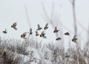 Зимняя охота на серую куропатку смотреть видео онлайн
