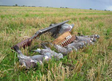Охота на болотную курочку и фазанов в Украине смотреть видео онлайн