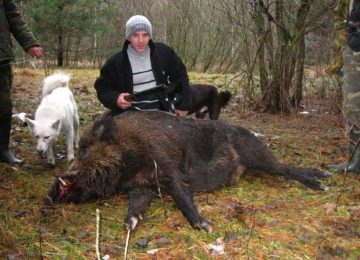 «Загонная охота на кабана в Беларуси» — смотреть видео онлайн