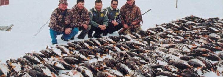 «Охота на гусей» смотреть видео онлайн