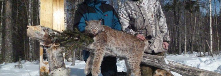 Охота на рысь видео. Смотреть видео охоты на рысь онлайн!