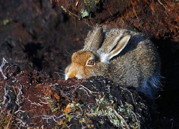 «Охота на зайца зимой с подхода » — смотреть видео онлайн