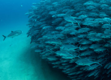 Стая рыб под водой