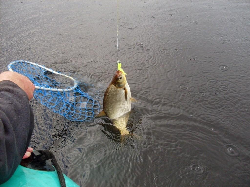 Пойманная рыба на леске