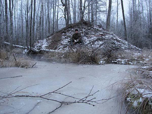 Охота у хатки зимой