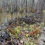 Плотина на болоте
