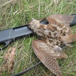 Remington 870 и вальдшнеп