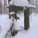 Кулёмка на куницу зимой