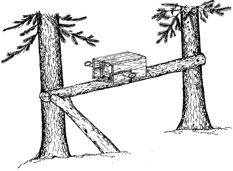 Установленная на высоте пружинная кулёмка