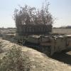 Необычная маскировка танка