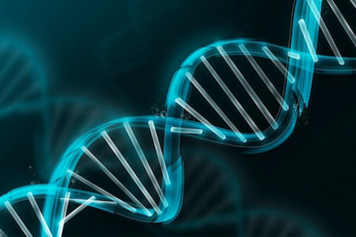 Цепочка ДНК со встроенными ферментами