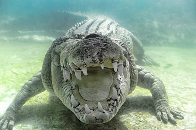 Морской крокодил