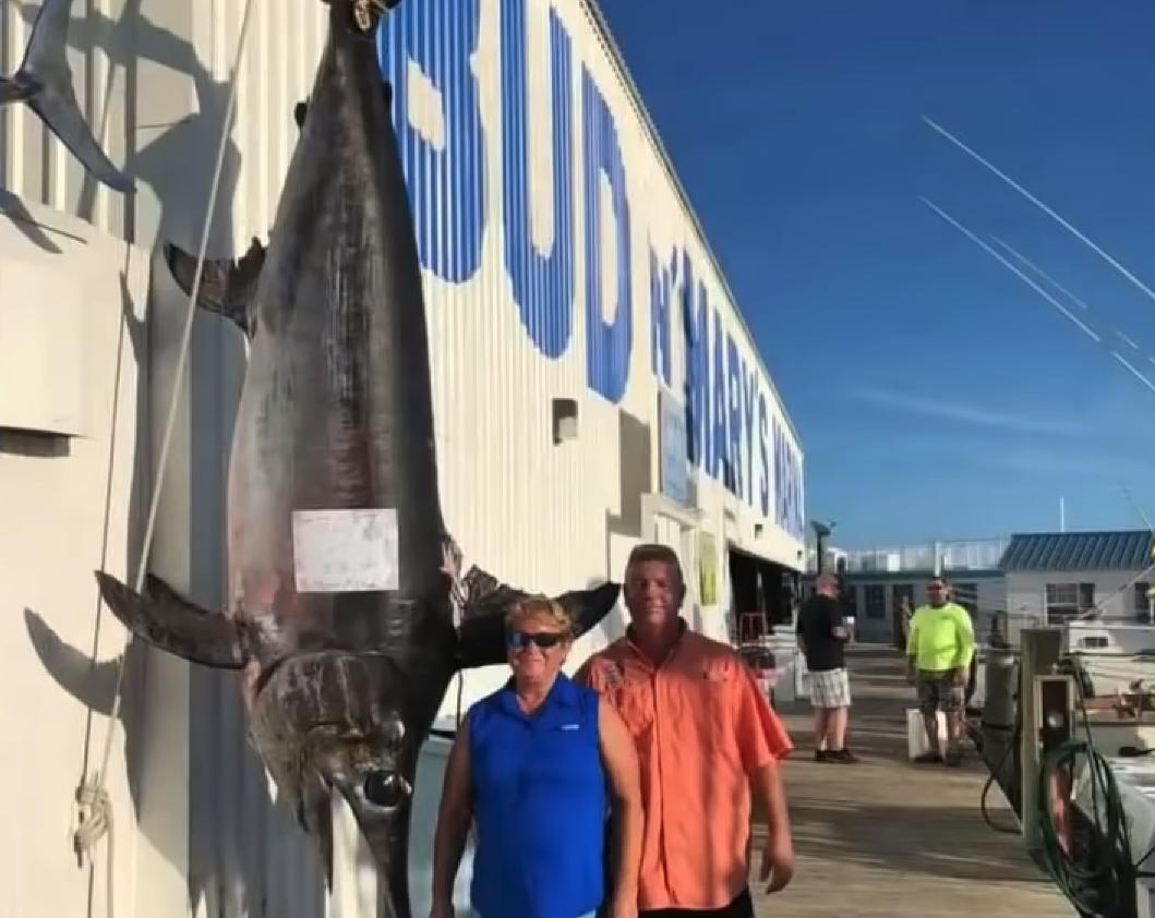 Рыба-меч весом 340 килограмм