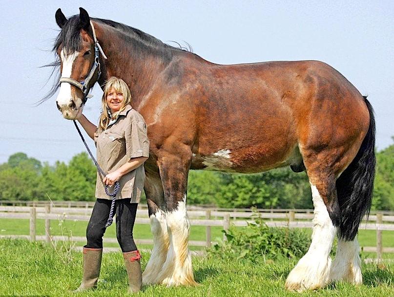 Лошадь Большой Джейк