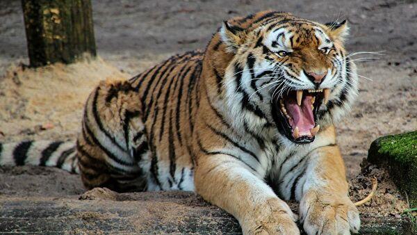 4 азиатских тигра страны