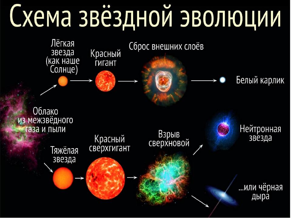 звезды типа солнца эволюционируют в такой последовательности