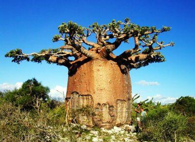 центральная африканская республика википедия