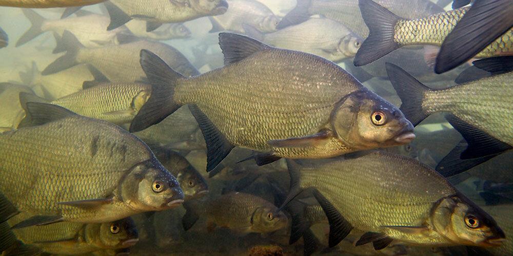 почему рыба гниет с головы