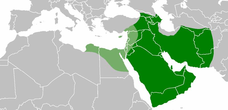 дайте определение понятий халиф
