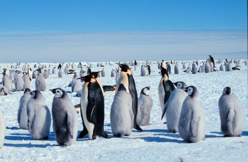 лазарев антарктида