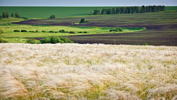 куликовское поле фото