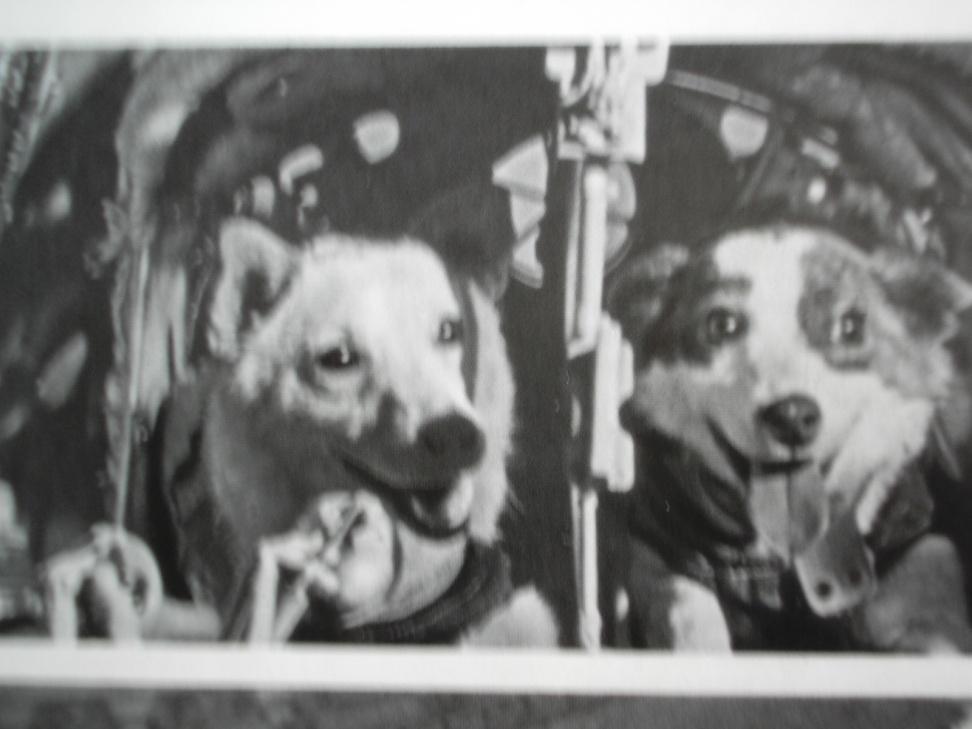 первая собака в космосе как звали