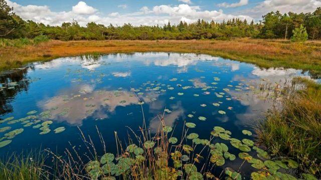 находки в болотах