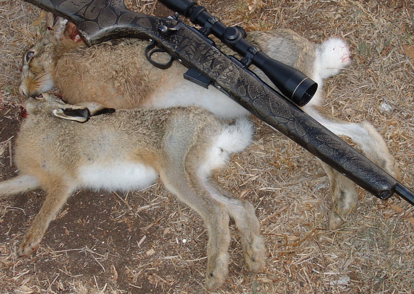 мелкашка полуавтомат для охоты