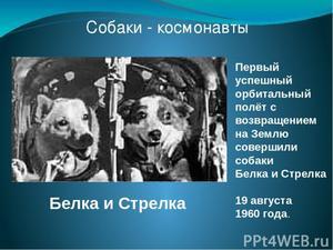 первая собака космонавт
