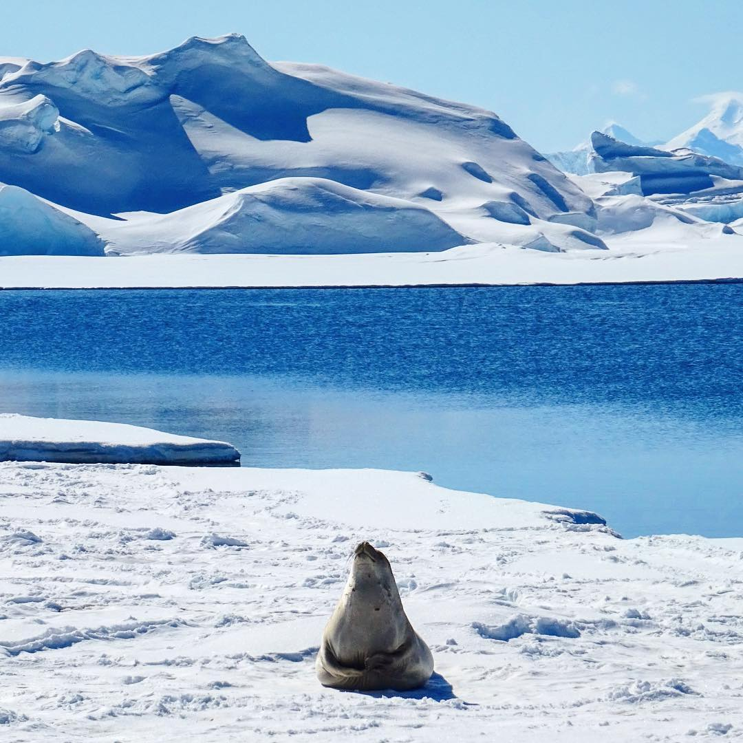 антарктида и арктика