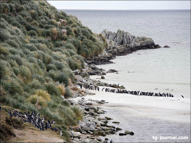 фолклендские острова кому принадлежат