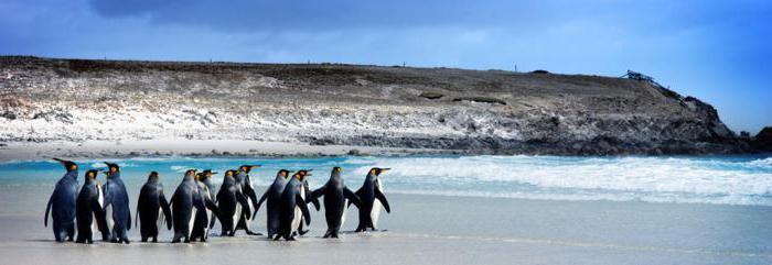 фолклендские острова википедия