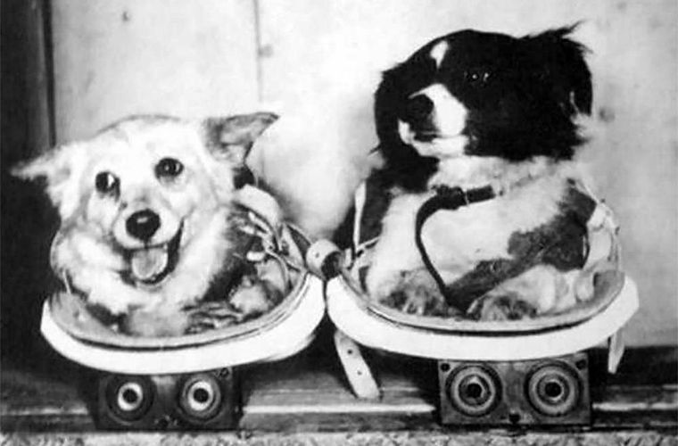 первая собака в космосе