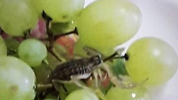 автомат скорпион