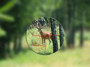 Как выбрать оптику для охоты