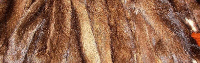 Современное развитие промысловой охоты на соболя и другого пушного зверя