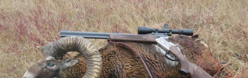 Заседание Совета Минприроды относительно развития охоты в РФ