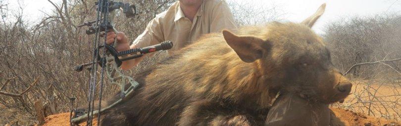 «Охота на кабана с луком» — смотреть видео онлайн