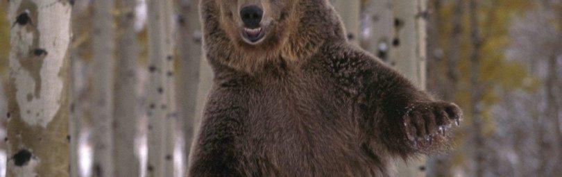 Охота на медведя в круге