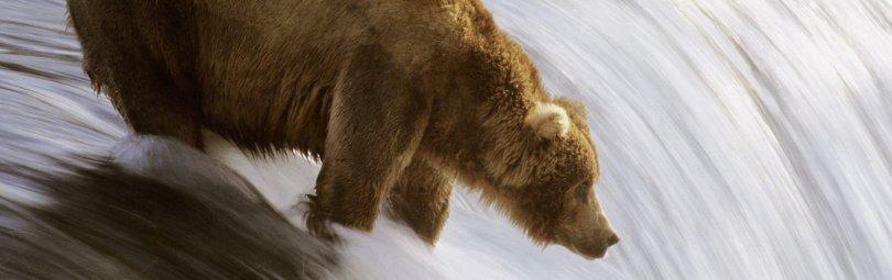 «Охота на медведя с лайками» смотреть видео онлайн